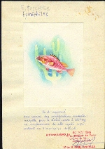 MADAGASCAR 1990. Fish. Signed Stamp Artist´s Work 87/122mm