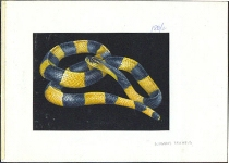 TANZANIA 1996. Snake B. Signatured Stamp Artist´s Works. Motif:131/89mm