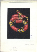 TANZANIA 1996. Snake C. Signatured Stamp Artist´s Works. Motif:131/89mm