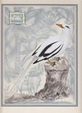 BERMUDA 1940s Nice bird on stump Essay 199x261mm