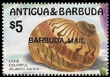 BARBUDA 1986 Marine life big shells fish $5 OVPT:BARBUDA MAIL (from sheetlet)
