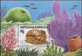 BARBUDA 1986 Marine life big shells fish $5 OVPT:BARBUDA MAIL sheetlet