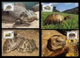 Monaco 1991. WWF. MC. Hermann's Tortoise turtle 10 sets (set:4. Total 40 pcs)